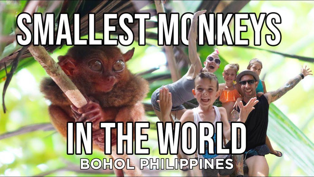 tarsier monkeys