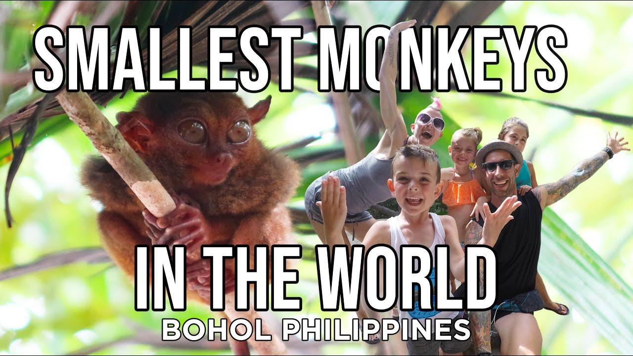 TARSIER MONKEYS in the Philippines